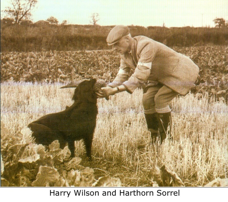 Harry Wilson and Harthorn Sorrel