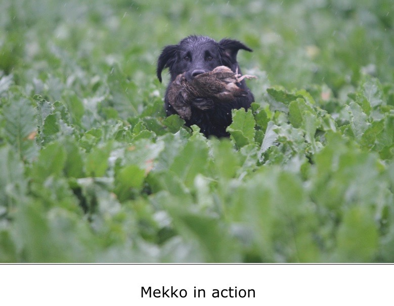 Mekko in action