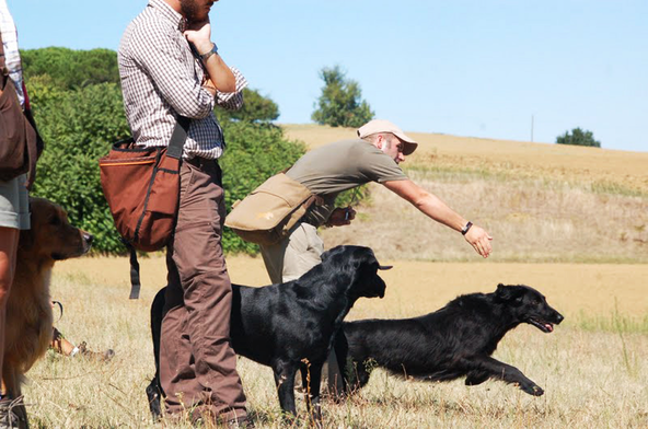 Retriever Working Test and Field Trials in central and