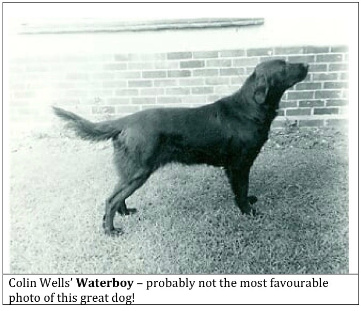 The past and future of the working Flatcoated Retriever