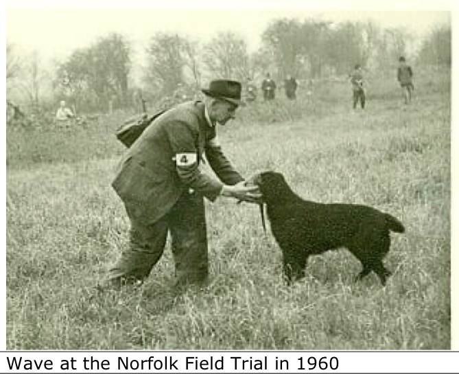 Wave at the Norfolk Field Trial in 1960