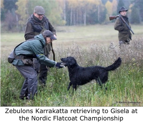 Zebulons Karrakatta retrieving to Gisela at the Nordic